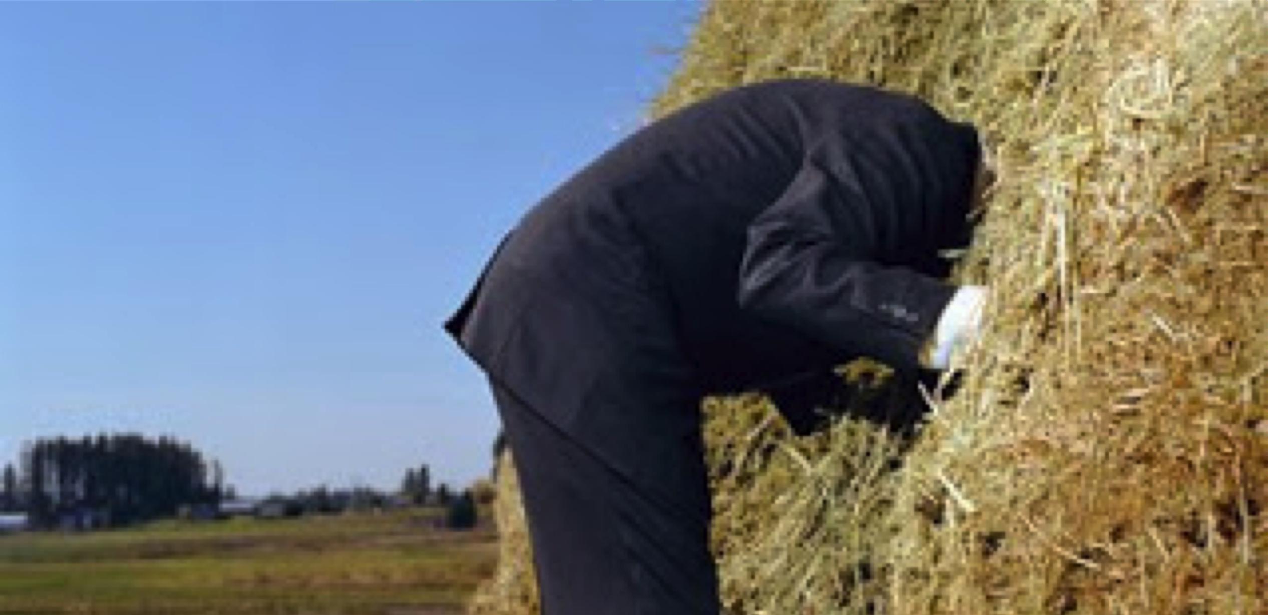 needle-haystack.png